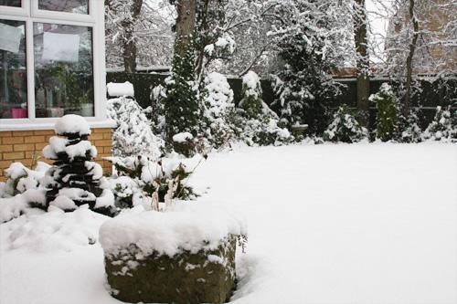 Snowday2